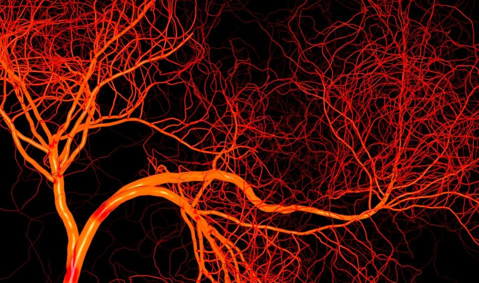 length of entire human blood vessels